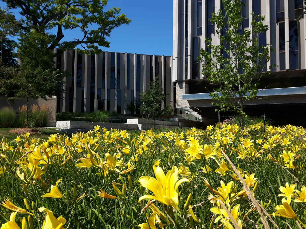 The library in the summer with yellow day lilies